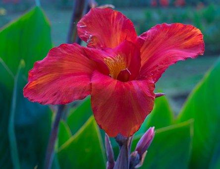 New Delhi, Micro Click, Park, Flower