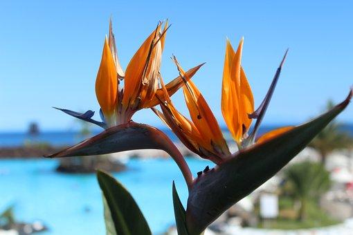 Bird Of Paradise, Flowers, Nature, Summer, Flower