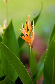 Yellow Flower, Flower, Nature, Micro
