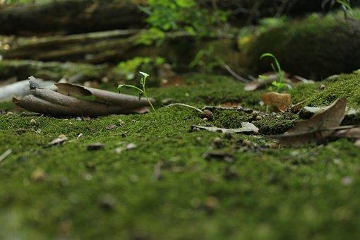 Grass, Moss, Nature, Green, Woods, Micro