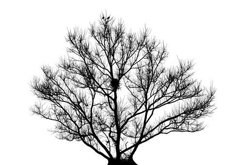 Tree, Nest, Backlit, Nature, Wildlife, Animal, Outdoors
