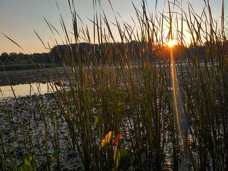 Hungary, Lake Tisza, Swamp, Lake, Nature, Water, Reed