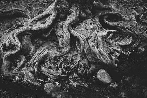 Roots, Dry, Tree, Nature, Wood