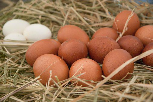 Eggs, Hen, Straw, Lay, Poultry, Farm