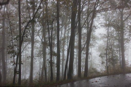 Tree, Trees, Fog, Nature, Mood, Foggy, Spooky