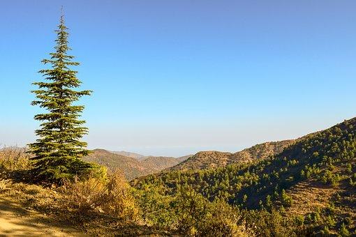 Fir, Tree, Nature, Forest, Landscape, Woods, Wilderness