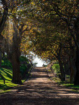 Drive, Driveway, Entrance, Road, Autumn, Forest, Park