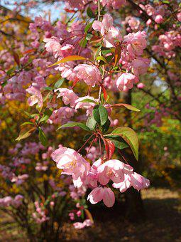 Flower, Inflorescence, Pink, Blooming, Garden, Botany