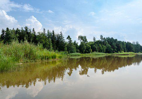 Forest, Bavaria, Trees, Germany, Nature, Out, Lake