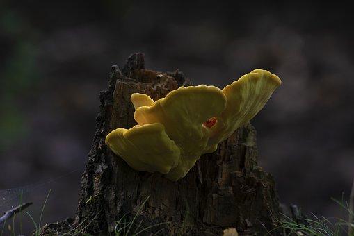 Mushroom, Hub, Forest, Tree, Nature, Trunk, Moss