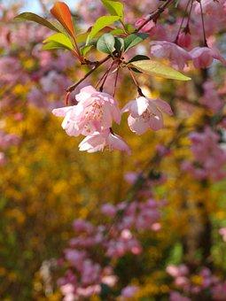 Flower, Spring, Inflorescence, Flora, Pink, Garden