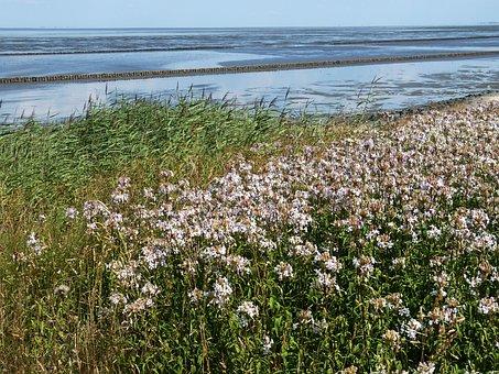 Watts, Wadden Sea, North Sea, Coast, Sea, Landscape