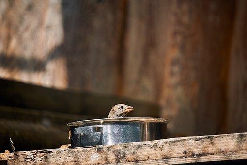 Sparrow, Bird, Pot, Nature, Animal, Feather, Plumage