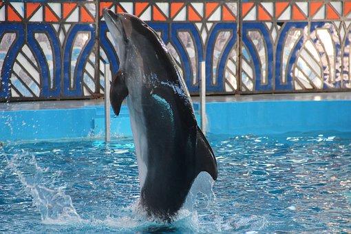 Dolphinarium, Dolphins, Dolphin, Show, Animals