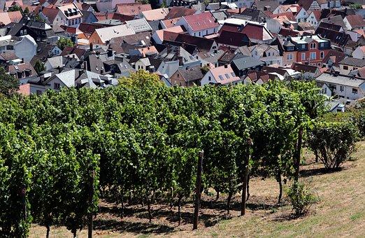 Vineyard, City, Germany, Landscape, Village, Houses