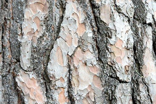 Tree, Trunk, Variegated, Bark, Rough, Hard, Wood