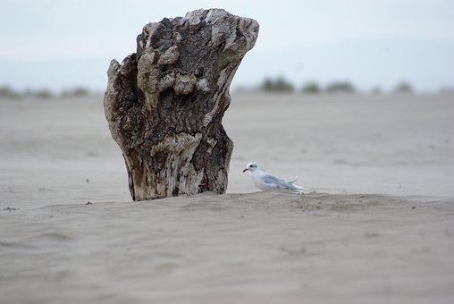 France, Seagull, Beach, Bird, Nature, Sand, Gard