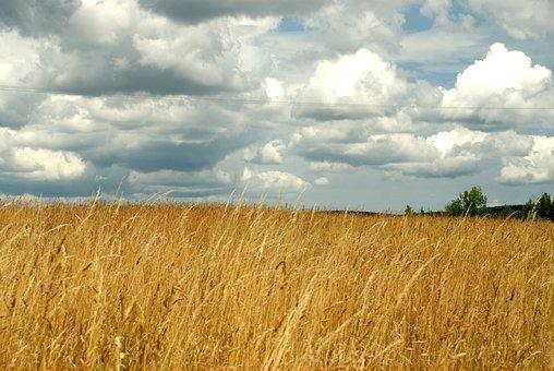 Meadow, The Ecclesia, Landscape, Poland, Field, Grass