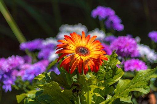 Orange, Flower, Purple, Green, Pot, Garden