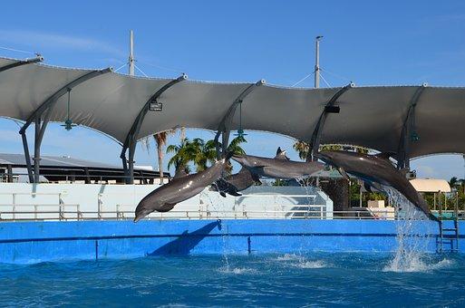 Miami, Seaquarium, Entertainment, Dolphins, Show