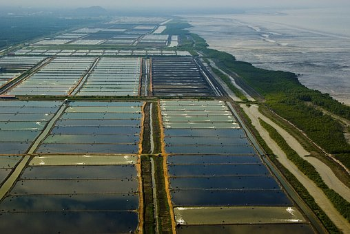 Malaysia, Selangor State, Paddi Fields, Sekincan Town