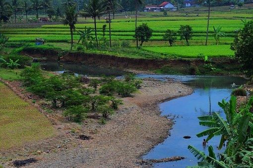 River, Village, Padi, Water, Purwokerto, Field, Natural