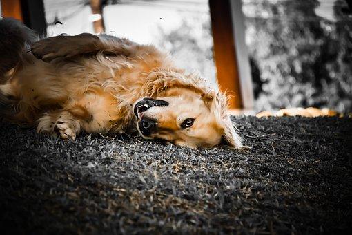 Dog, Happy, Pet, Animal, Canine, Smile, Fun, Puppy