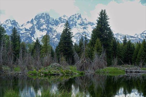 Beaver Lodge, Hiking, Tetons, Wyoming, Mountains, Lake