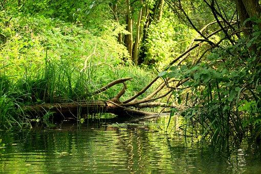 Channel, Landscape, Tree, Green, Figure, Nature
