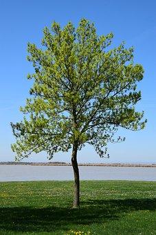 Single Tree On The Zicksee, Deciduous Tree, A Tree