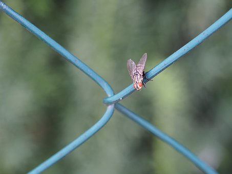 Fly, Insect, Garden, Fence, Nature, Beetle, Close Up