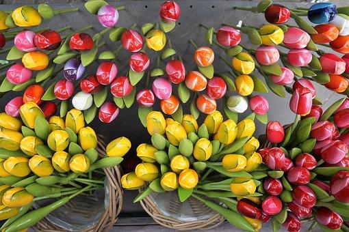 Flowers, Tulips, Holland, Spring, Garden, Wood