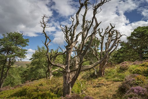 The Roaches, United Kingdom, Forest, Landscape, Trees