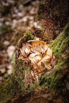 Moss, Nature, Forest, Autumn, Autumn Mood, Wood, Bark