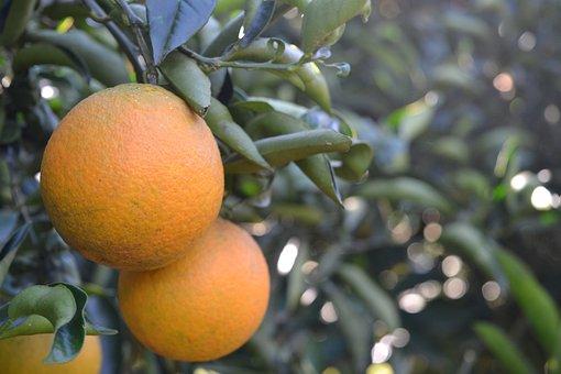 Orange, Fruit, Healthy, Food, Sweet, Citrus, Vitamin