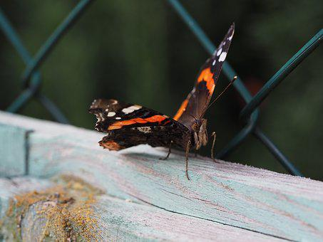 Butterfly, Fence, Insect, Nature, Flower, Summer