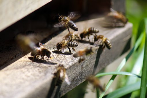 Honey Bee, Air Hole, Nature, Bees, Beehive, Insect
