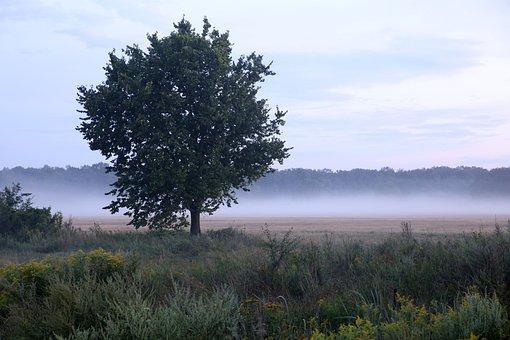 Mati, Tree, The Fog, Field, In The Morning, Sky