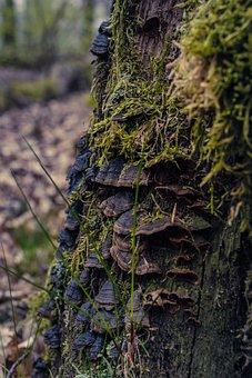 Tree Fungus, Moss, Nature, Forest, Autumn, Mushroom
