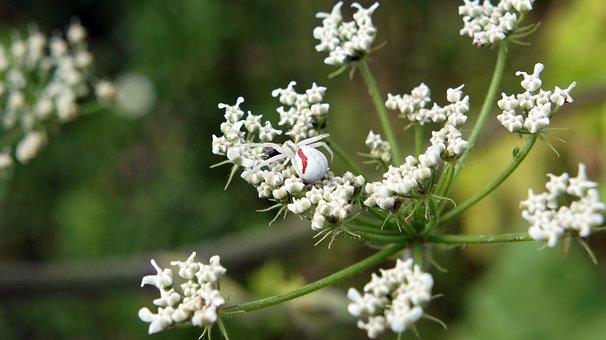 Spider, Plant, Bloom, Flower, Nature, Summer, Garden