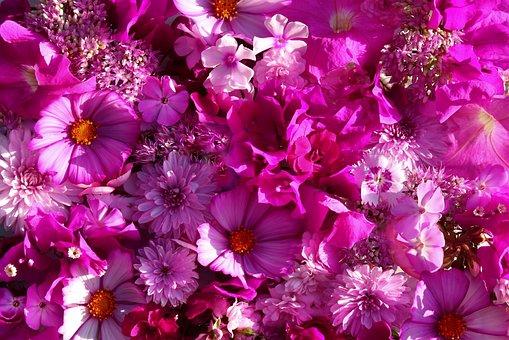 Flowers, Pink, Nature, Garden, Summer, Flora, Romance