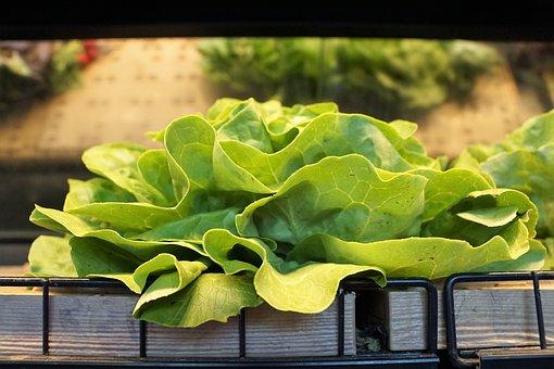 Salad, Market, Vitamin, Green, Delicious, Fresh