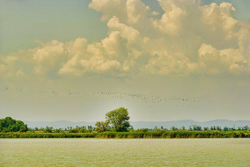 Nature, Landscape, Zicksee, Clouds, Flock Of Birds, Sky