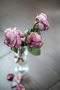 Rose, Vase, Dead, Dried Flowers, Flowers, Petals, Pink