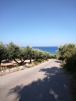 The Olives, Way, Sea, Summer, Tree, Road, Nature
