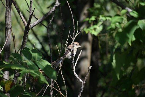 Animal, Forest, Wood, Green, Bird, Wild Birds, Mozu