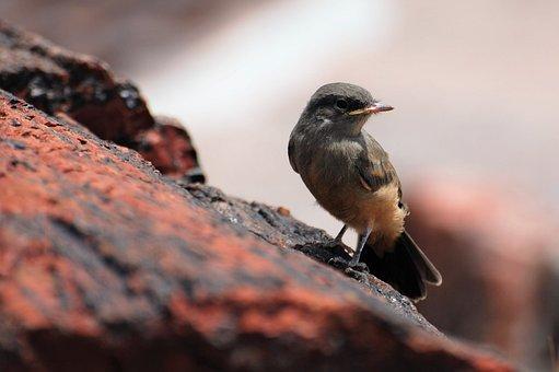 Bird, Beak, Feathers, Plumage, Empidonax