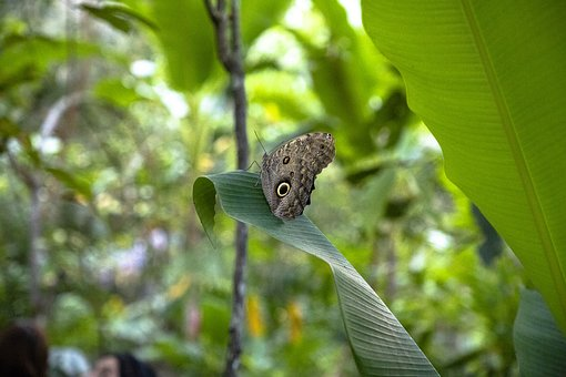 Butterfly, Butterfly Garden, Nature, Insects, Wings