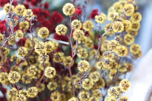 Gypsophila Elegans, Yellow, Flowers, Colorful
