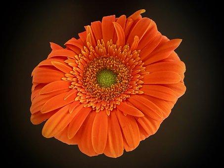 Blossom, Bloom, Flower, Plant, Close Up, Petals, Bloom